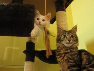 Cat Cafe Budapest Damjanich